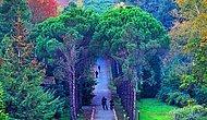 İstanbul'un Saklı Cenneti Atatürk Arboretumu Hakkında Bilmeniz Gereken Her Şey