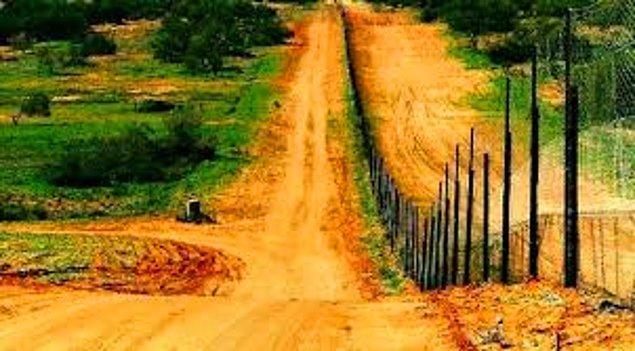 11. Avustralya'daki Dingo Çiti, Çin-Rusya sınırından daha uzundur.