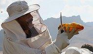 Toplu Arı Ölümlerinin Nedeni Zirai İlaçlar: 'Yılda 200 Bin Kovan Kaybediyoruz'
