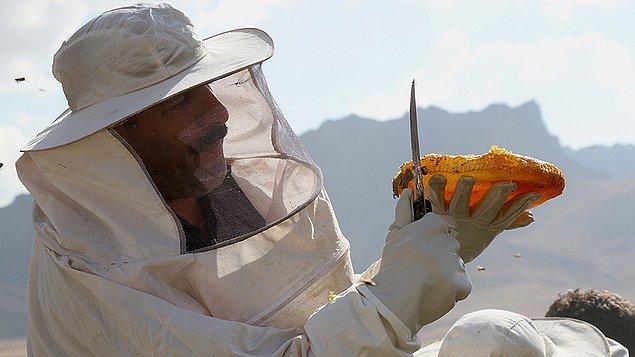 'Tarımsal faaliyetlerden uzak bölgelerdeki arıcılıkta toplu arı ölüm görülmüyor'