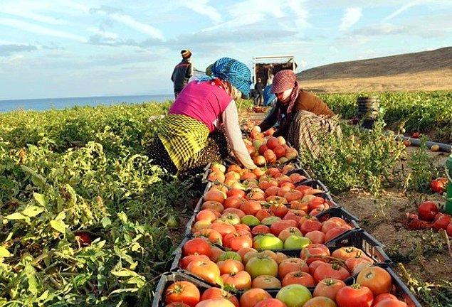 📌 Yurt içi üretici fiyatlarında ise yıllık artış yüzde 45 seviyesinde.