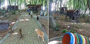 Samsun'da Kediler, Mozart'ın Turkish Anthem Müziği Eşliğinde Yemeğe Çağrılıyor!