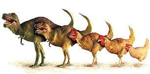 Kitap Ödüllü Bu Evrim Teorisi Testinde 5/10 Yapmak Çok Zor!
