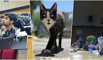 İstanbul Tıp Fakültesi'nde Derslere Giren ve Dikkatlice Hocaları Dinlerken Amfide Uyuyakalan Kedi'yle Tanışın! 😻