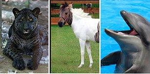Kimi Doğa Ana Kimi de İnsan Eliyle Bir Araya Gelmiş İki Türden Doğan 13 Aşırı Güzel Hayvan