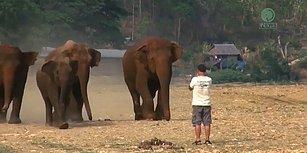 Eski Bakıcılarının Sesini Duyunca Koşa Koşa Yanına Giden Filler