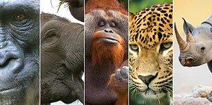Nesli Tükenme Tehlikesiyle Karşı Karşıya Olan 5 Hayvan Türü