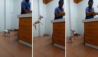 Veterinere Getirilen Dostu İçin Endişelenen Köpeğin Heyecanlı Anları