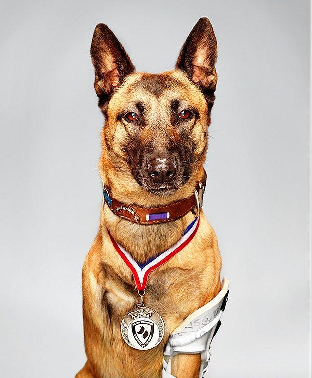 5. Bu gördüğünüz köpek, insanları kurtarmak için 4 kez yaralandı ama vazgeçmedi...