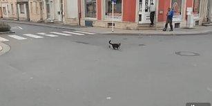 Fareye Çattığına Pişman Olan Kedi