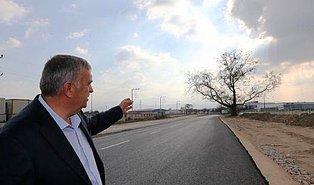 Sakarya'da 270 Yıllık Çınar Ağacının Kesilmemesi İçin Yol Güzergahı Değişti