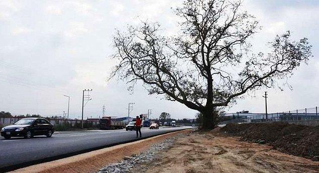 'Düz giden bu yolumuzu biraz kavisli çevirerek ağacı da dalları da kurtarmış olduk'