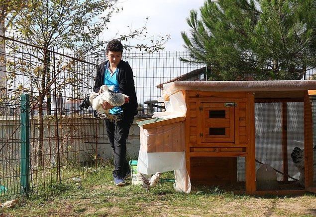 11. Kocaeli'de yaşayan ve Samsun'da bir fen lisesini kazanan Hüseyin için okul idaresi, çok sevdiği tavuklarını getirebilmesi amacıyla bahçeye kümes yaptırdı.