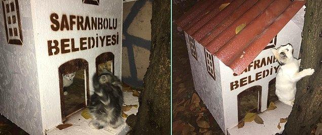 """9. Safranbolu Belediyesi, sahipsiz hayvanların sokaklarda güven içinde yaşamaları için farkındalık oluşturmak adına pek çok mahalleye """"'Kedi Evleri"""" konumlandırıyor."""