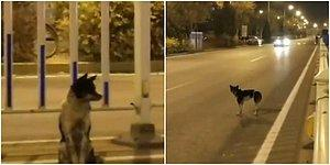 Geri Dönmesi Umuduyla Yerinden Ayrılmıyor! Çin'de Bir Köpek Sahibinin Öldüğü Yerde 80 Gündür Bekliyor