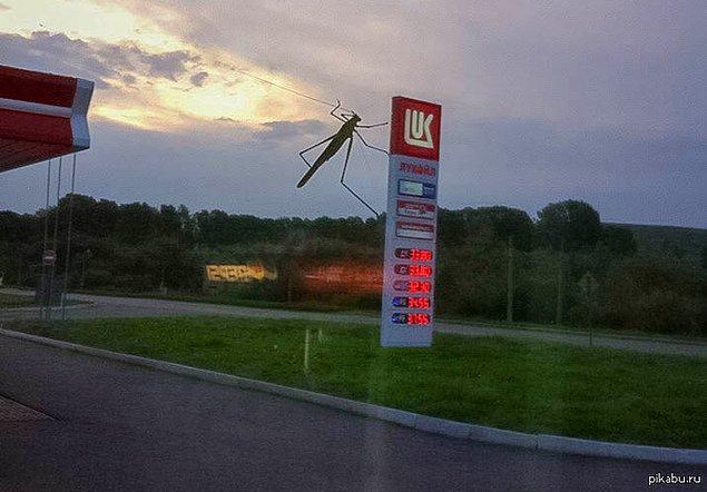 """12. """"Kaçın! Akaryakıt istasyonuna dev bir böcek saldırdı!"""""""