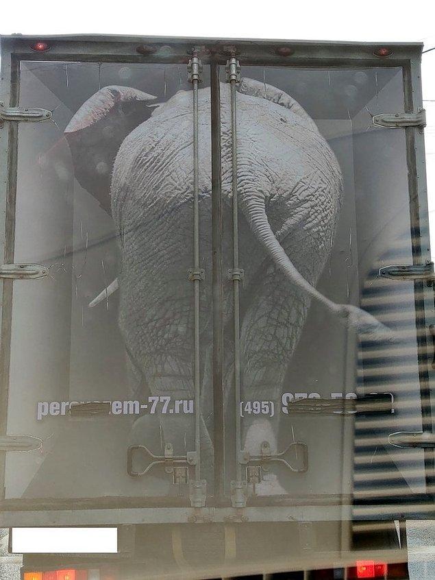 """15. """"İlk baktığımda kamyonun kasasına bir fil yüklemişler sandım."""""""