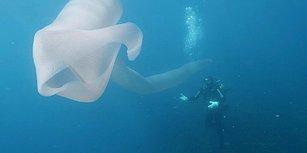 Dev Bir Solucanı Andıran 8 Metrelik Garip Deniz Canlısı