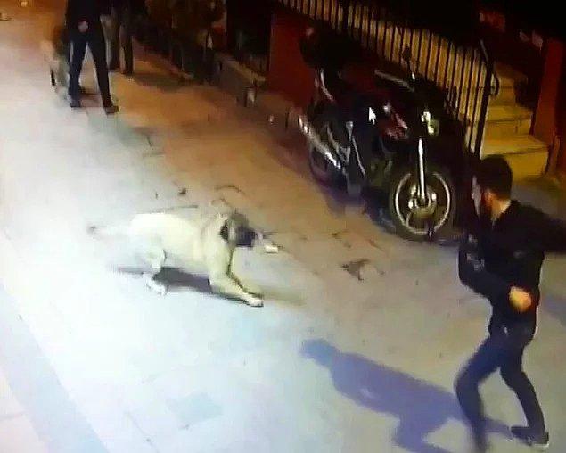 7. İnsanlık nereye gidiyor? - Kemerle dövülüp bıçaklanan köpek ve yavrusu