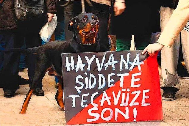 24. Bu da oldu, evet - Tarsus'ta köpeğe tecavüz eden adam