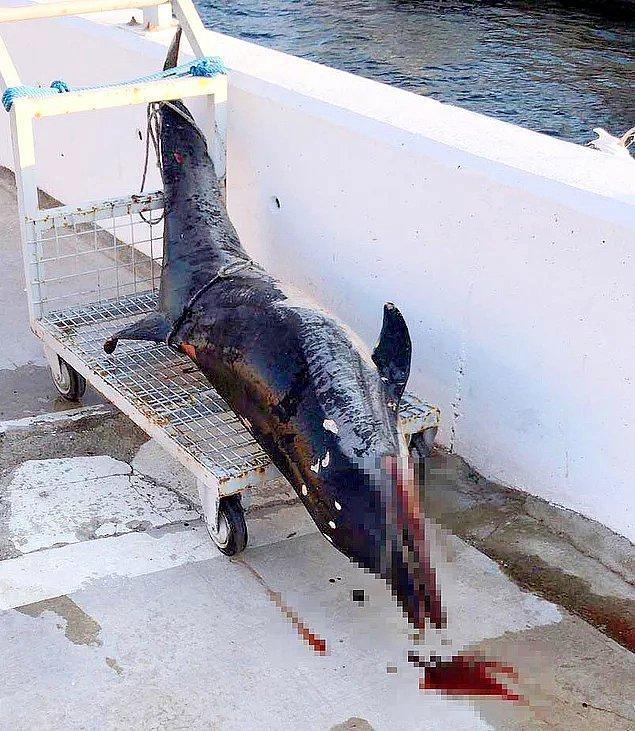 53. Bunu yapan insan olamaz - 8 kurşunla öldürülen yunus balığı