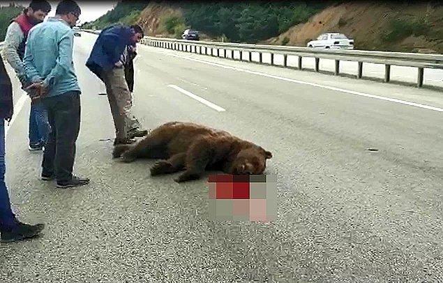 72. Siz nasıl insanlarsınız? - Çarparak öldürdükleri ayıyı tekmeleyen insanlıktan çıkmış yaratıklar