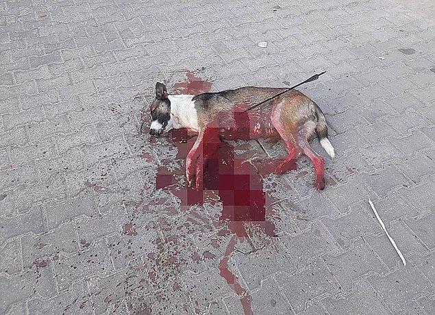 74. Bu zulüm ne zaman bitecek? - Okla vurularak öldürülen köpek ve öksüz kalan yavruları