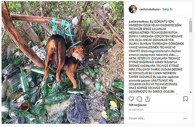 83. Bitmiyor, bitmiyor! - Ağaca bağlanan köpeğe tecavüz iddiası