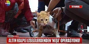 Trafik Kazasından Sonra Felç Kalan Kediye 3B Yazıcı ile Yürüteç Yapan Güzel İnsanlar