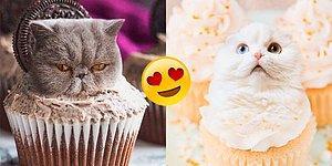Gördüğünüz Andan İtibaren Mıncıklamak İçin Can Atacağınız, Yiyeceklere Uyum Sağlamış 18 Kedi