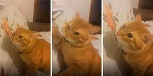 Tırmaladıkça İnsan Dostunu Keyiflendiren Psikopat Kedi Haydar
