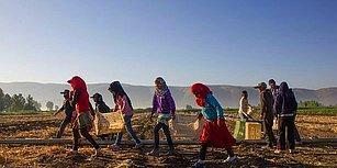 Tablo İçler Acısı: Dünya Çocuk Hakları Günü'nde Türkiye'de Çocuk Olmak