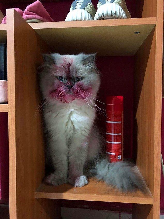 """7. """"Kedim rujların mükemmel birer oyuncak olabileceğine karar verdi."""""""