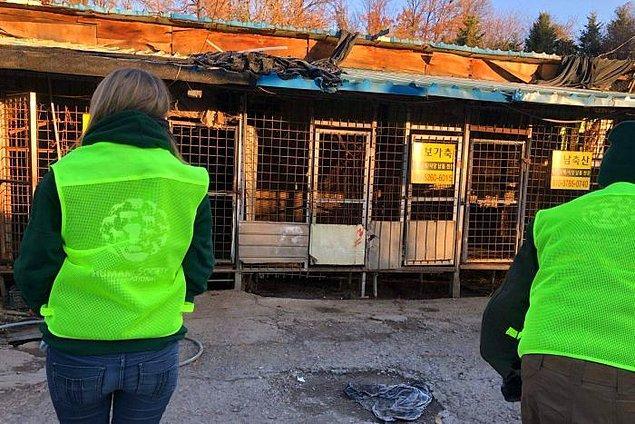Kapatılan Taepyeong-dong mezbahasında yüzlerce köpek bulunuyordu. Köpekler elektrik verilerek öldürülüyor, tıraş ediliyor ve kesiliyordu.