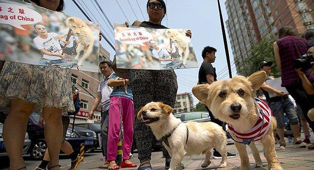 Ülke nüfusunun beşte biri de evcil hayvan olarak köpek besliyor.
