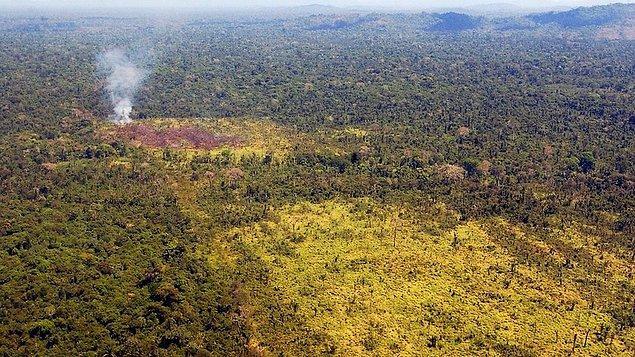 Verilere bakıldığında ağaç kesiminin, önceki yılın aynı dönemine göre yüzde 13,7 oranında arttığı tespit edildi.