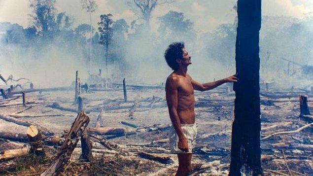 Brezilya Çevre Bakanı Edson Duarte, ağaçların yasadışı kesiminin ormanı tahrip ettiğini bildirdi.