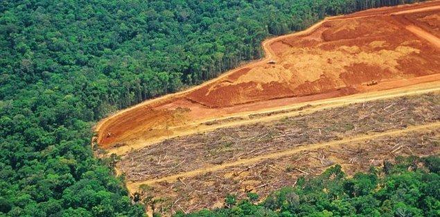 Amazon ormanlarında, 2004 yılında Haiti büyüklüğünde, 27 bin kilometrekarelik alan tahrip edilmişti.