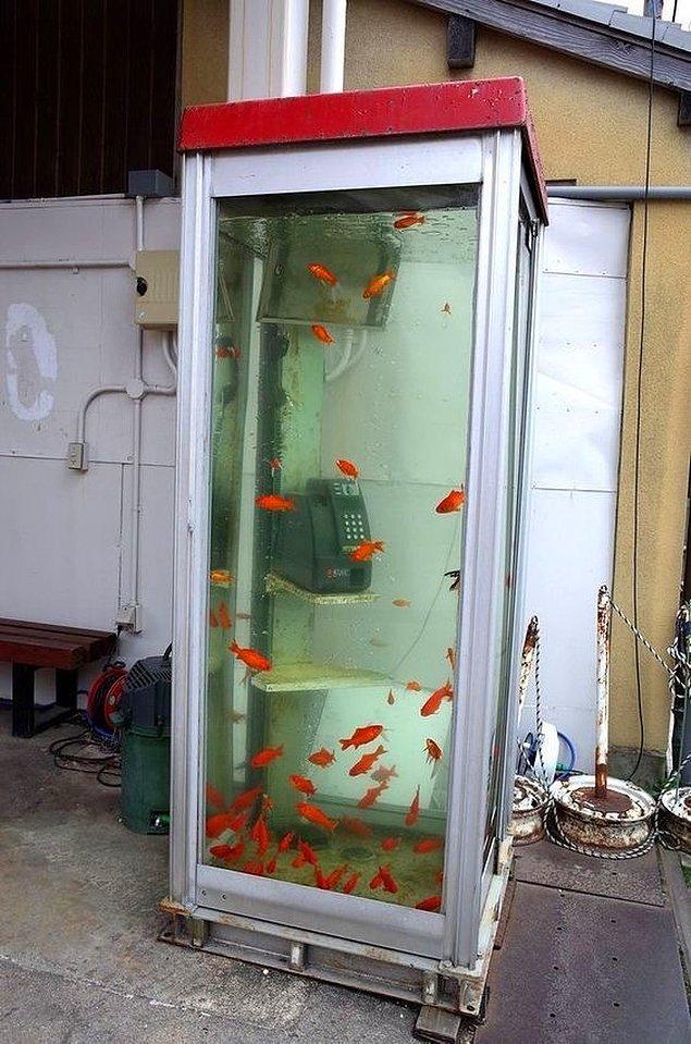 2. Aquaman'in telefon kulübesi mi bu?