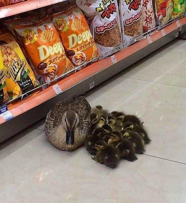"""14. """"Sanırım 6 numaralı reyonda biri ördeklerini düşürdü."""""""