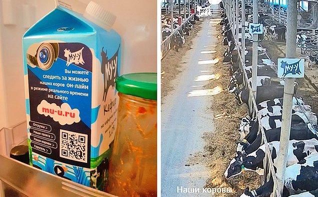 14. Rusya'da bir süt markası, sizleri online bir gezintiye davet ediyor.