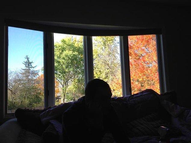 5. Her camında farklı bir mevsim yaşanan pencere.