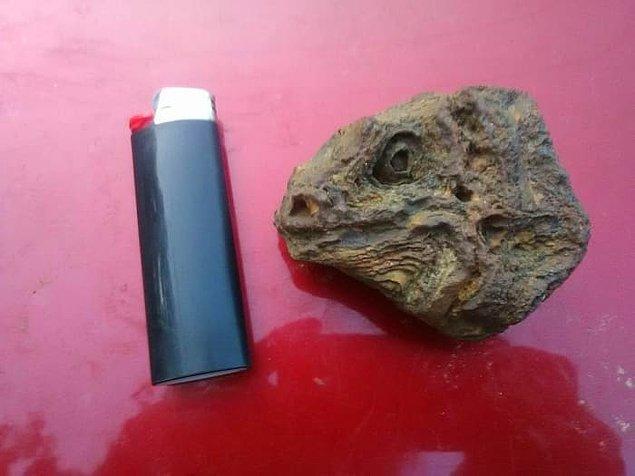 14. Çakmağın yanındaki sadece bir taş, iguana kafası değil.