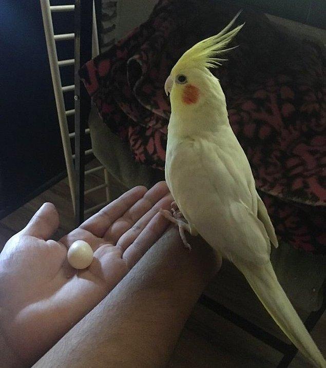 """26. """"Bir erkek olduğunu düşündüğümüz kuşumuz Enzo, bu sabah yumurtladı""""."""