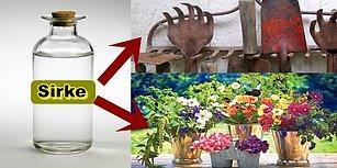 Hem Doğal Hem Ekonomik! Sirkenin Bitkiler Üzerindeki 14 Mucizevi Etkisi