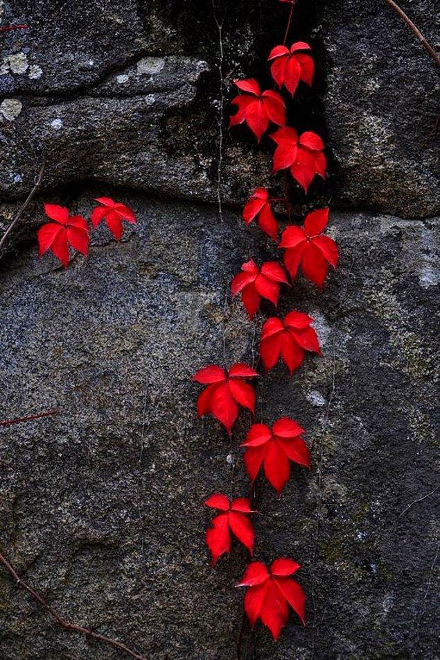 11. İçinde kırmızı rengi barındıran bir duvar kağıdı ilk tercih olabilir.