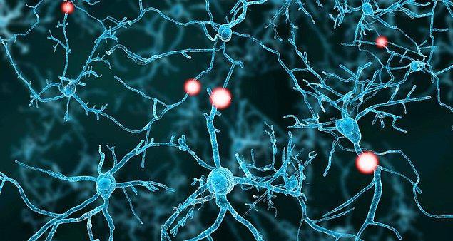 Gen terapisi gören gruptaki hastaların beyninde plasebo alanlarda görülmeyen bağlantıların oluştuğu gözlemlendi.