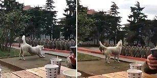 'Şehitler Ölmez Vatan Bölünmez' Sözleriyle Yeri Göğü İnleten Mehmetçik'e Eşlik Eden Köpek