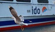 1 Aralık'ta Durdurulacağı Açıklanmıştı: İDO, Görüşmeler Sonuçlanana Kadar İç Hat Seferlerine Devam Edecek