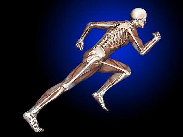 4. Kemikleri güçlendirir.